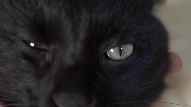 detail, 4k, zelené oči černé kočky.