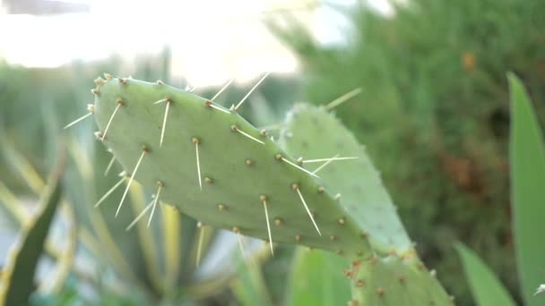 Exotické rostliny. Detail pichlavý kaktus. 4k