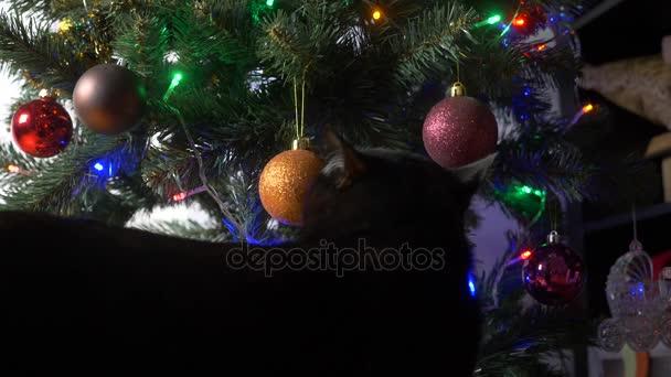 Roztomilá černá kočka si hraje s ozdoba na vánoční tree.4k, pomalý pohyb