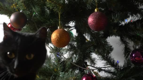 cute black cat playing with ornament on christmas tree4k slow motion stock - Black Cat Christmas Tree
