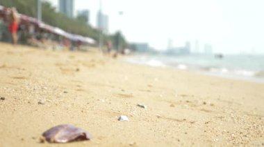 view of the urban Asian beach, embankment. 4k. blur, background