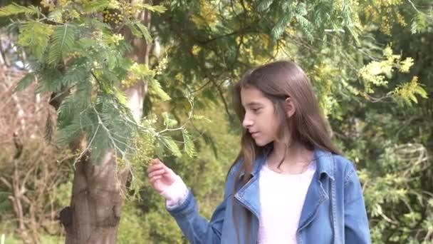 portrét. Krásné dospívající dívka na pozadí Blooming mimosa strom. dívka sniffs květiny Mimosa. 4k, pomalý pohyb