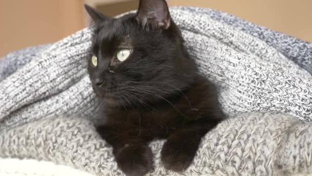 černá chlupatou kočku spící na polici s vlnou pletené věci. 4k, pomalý pohyb