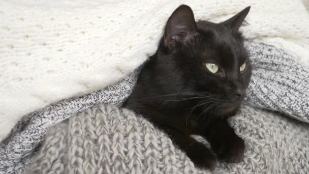 schwarze flauschige Katze, die auf einem Regal mit Strickwaren aus Wolle schläft. 4k, Zeitlupe
