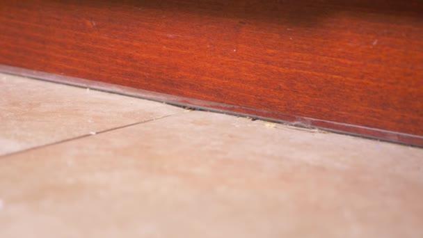 detail, Kašný, 4. Detail nečistoty, prach, vlasy a zbytky na podlaze v kuchyni