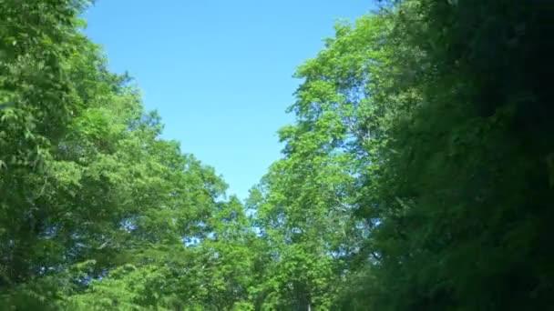 Pohled z okna jedoucího auta v horách uprostřed lesa v létě. 4k, pomalý pohyb
