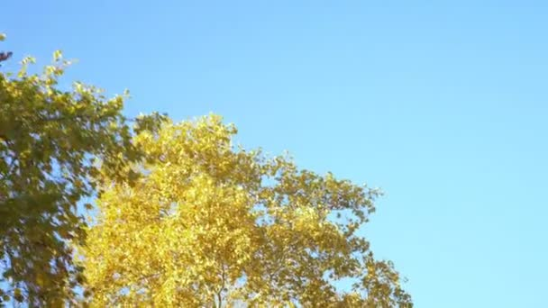 The view from the car window on the autumn foliage of trees along the road against a blue sky.