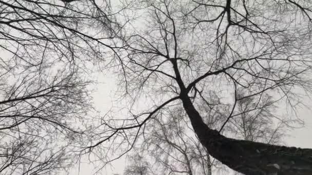 pohled zdola nahoru. mezi stromy padá sníh