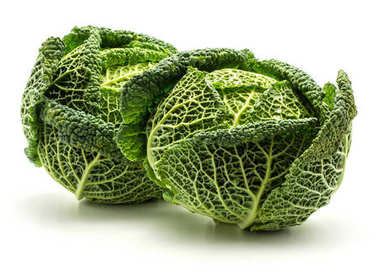 Two savoy cabbages isolated on white background fresh green head