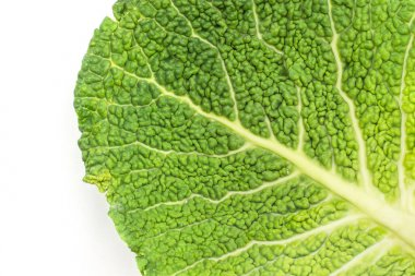One savoy cabbage leaf close-up isolated on white background fresh green top vie