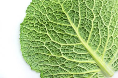 One savoy cabbage leaf isolated on white background fresh green top vie