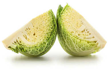 Two savoy cabbage quarter slices isolated on white background fresh cut gree