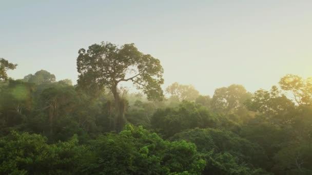 4 k Hd satelitní pohled kamery se přesune, zvedá ze zeleného lesa husté smíšené stromů borovice a břízy
