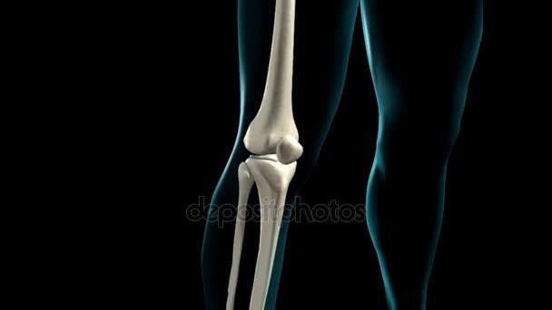 Human knee anatomy rotation stock video ozguyilmazhotmail human knee anatomy rotation stock video ccuart Choice Image