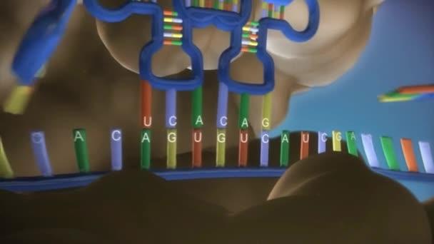 DNA close-up, DNA Molecule Model, DNA Strands, DNA animation.3D