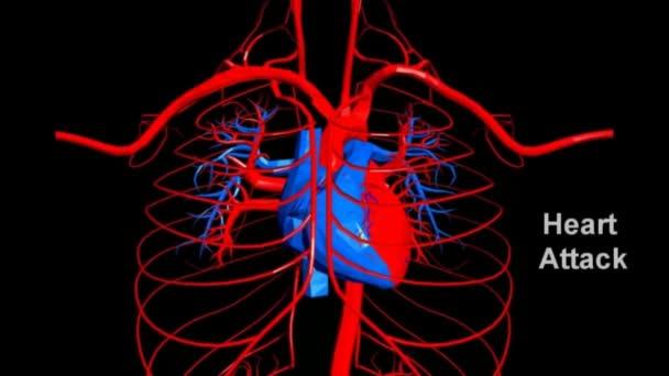 Alle Menschlichen Körpersysteme Übergang Körper — Stockvideo ...