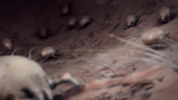 flea crawling through cat fur flea