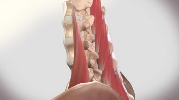 Chronische Schmerzen Unteren Rücken Animation Die Schmerzen Unteren ...