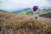 Fotografie spring flower