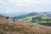 Tavaszi virágok, a hegyek
