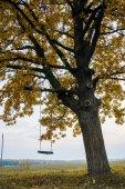 Fotografie Schwingen Sie am Baum hängen