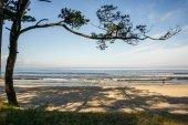 strom na pobřeží Jaderského moře