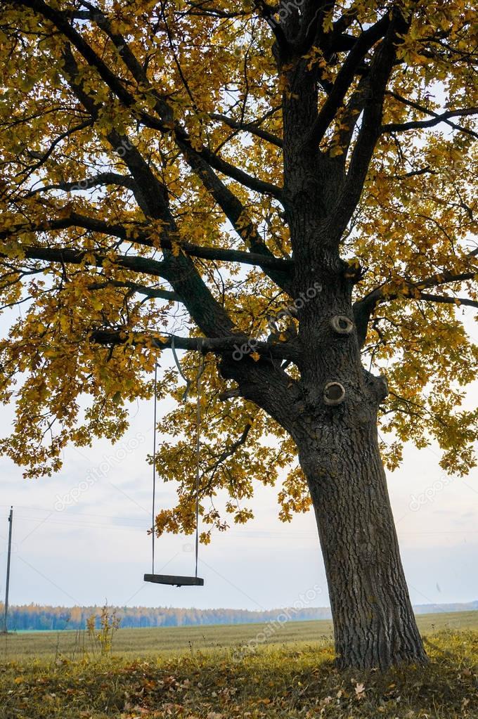 swing hanging on tree