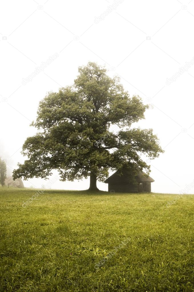 house under big tree