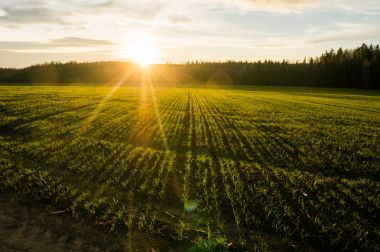 Spring field at sunrise