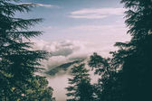 Fotografie evergreen trees and beautiful mountains with clouds in Indian Himalayas