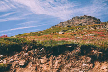 majestic mountain landscape with beautiful blooming flowers in Indian Himalayas, Rohtang Pass