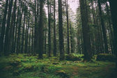 Photo forest