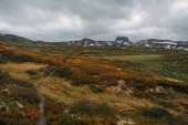 Fotografie view of field with orange and green plants and rocky hills on background,Norway, Hardangervidda National Park