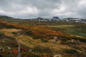 pohled na pole s oranžové a zelené rostliny a skalnatých kopců na pozadí, Norsko, národní Park Hardangervidda