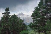 krásnou vyhlídku na stromech v horách, Kavkaz, Rusko