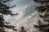 Fotografie verschneiter Wald