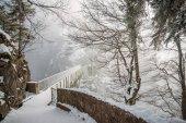Fotografie malebný pohled na stromy a most ve sněhu u zámku Neuschwanstein, Německo