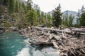 jasné jezero, stromy a hory v Altaji, Rusko