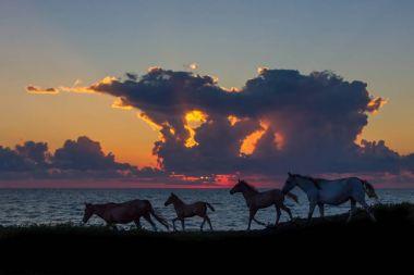 "Картина, постер, плакат, фотообои ""лошади"", артикул 178407180"