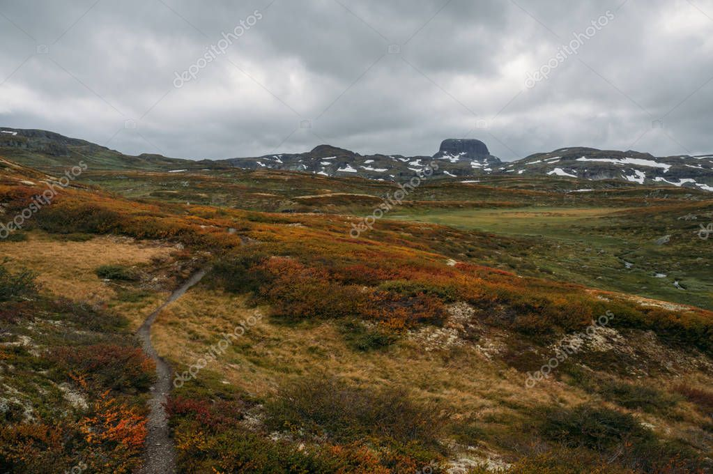 view of field with orange and green plants and rocky hills on background,Norway, Hardangervidda National Park