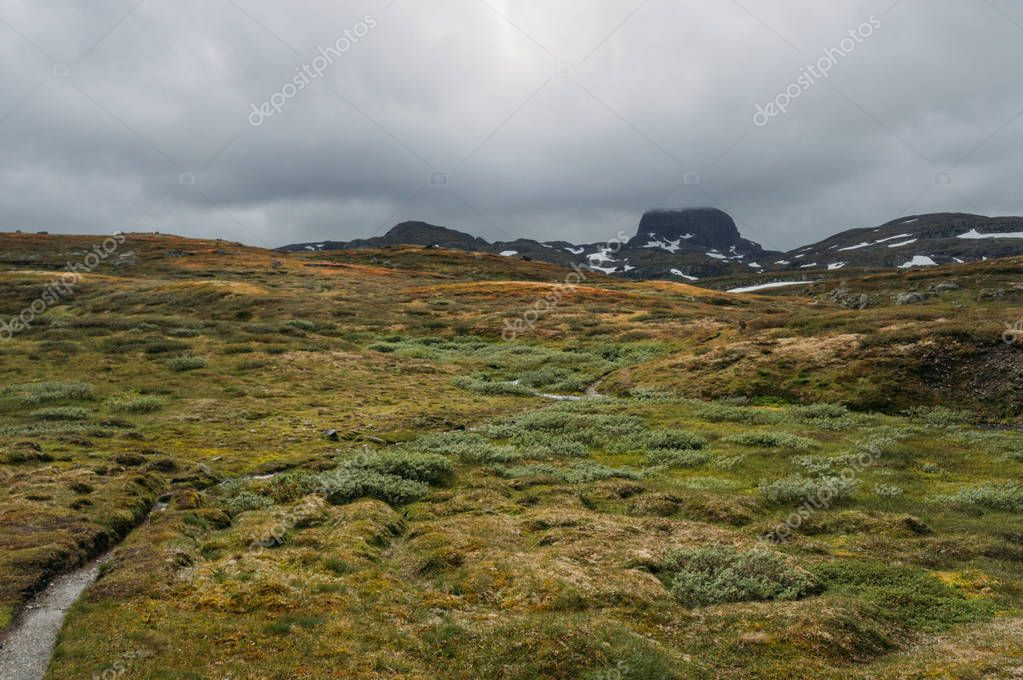 view of field with green grass and rocks on background, Norway, Hardangervidda National Park