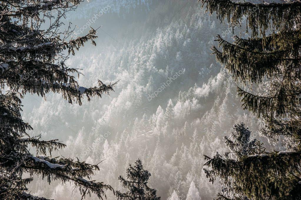Фотообои snowy forest