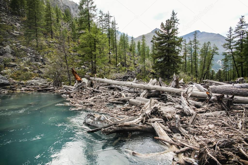 clear lake, trees and mountains in Altai, Russia