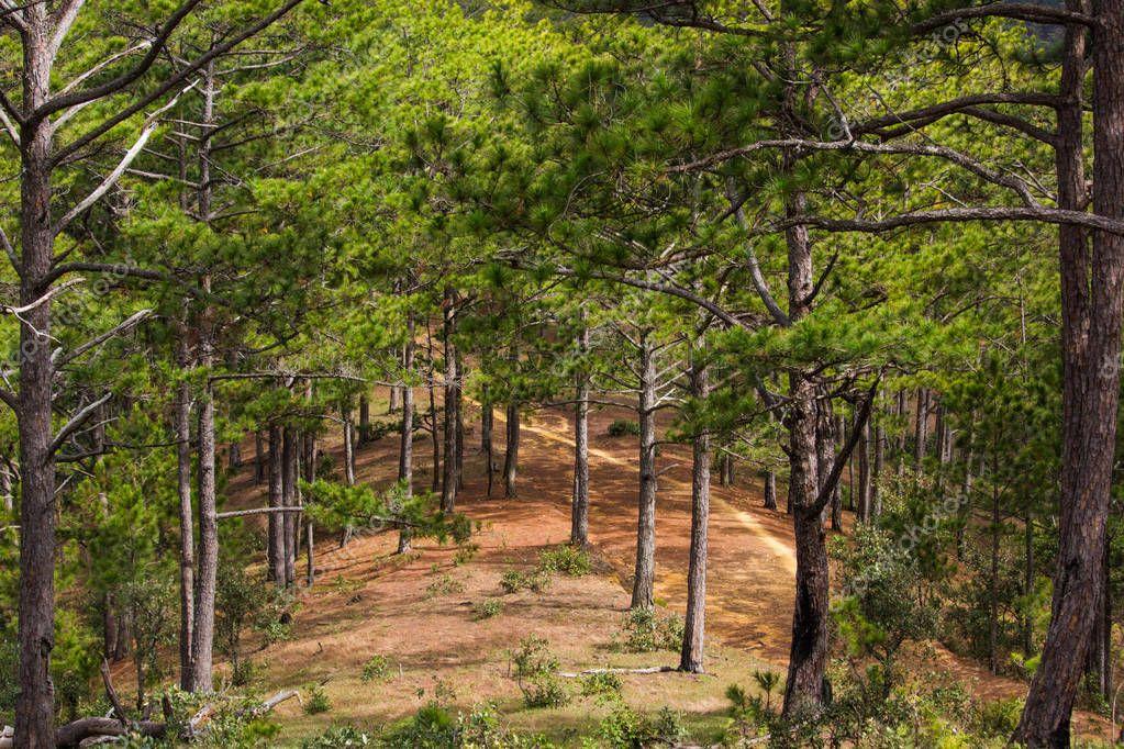 Фотообои лес