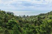 Fotografie tropical