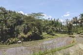 Photo plantations