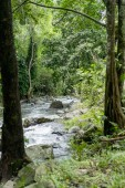 Fotografie scenic view of river, trees with green foliage and rocks, Bali, Indonesia