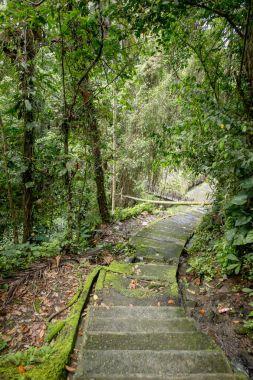 """Картина, постер, плакат, фотообои """"живописный вид пустых ступеней и деревьев с зеленой листвы вокруг, бали, индонезия лес цветы водопады"""", артикул 191835156"""