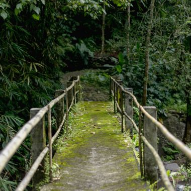scenic view of bridge and various trees with green foliage, Bali, Indonesia