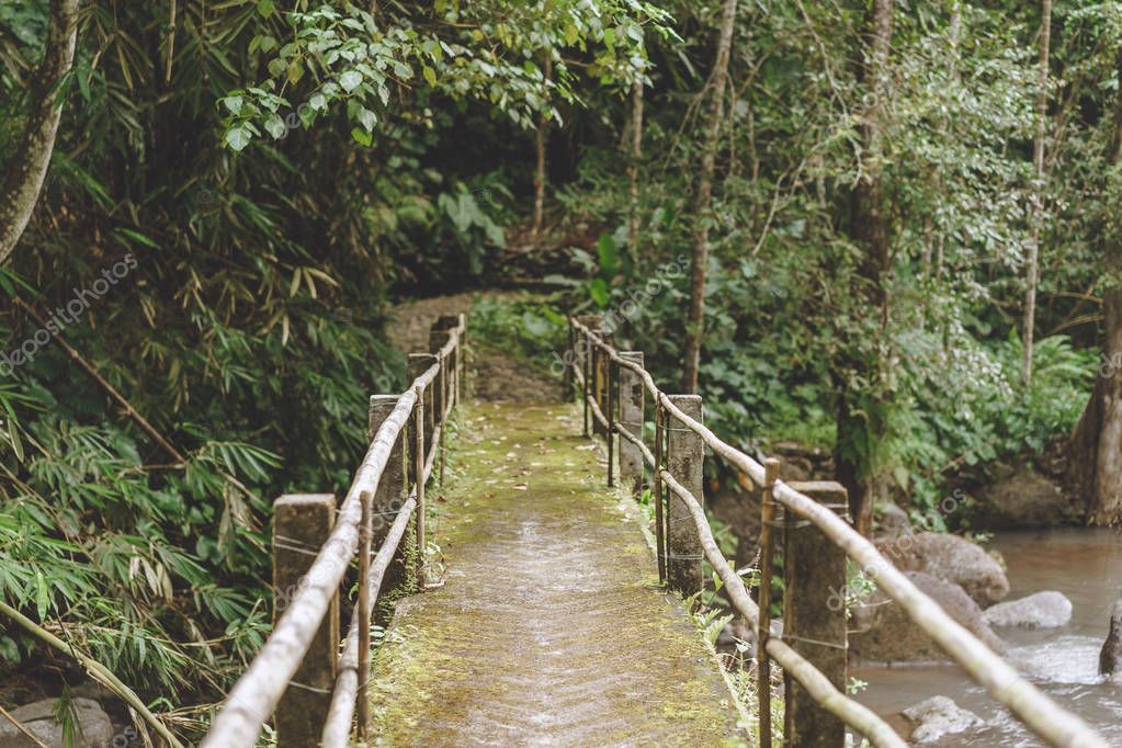 scenic view of bridge over river and various trees with green foliage, Bali, Indonesia